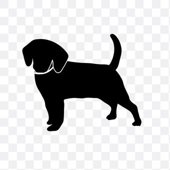 迷你腊肠犬