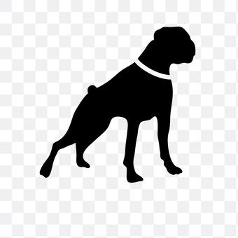 拉布拉多猎犬