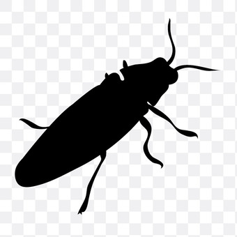 A badger beetle