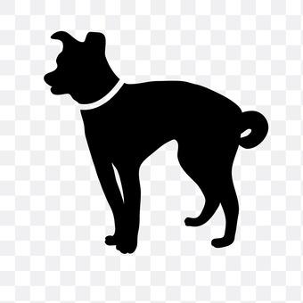 微型短毛猎犬