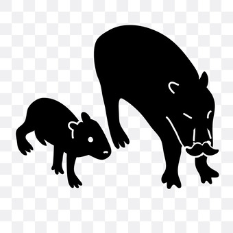 Parent and child of a boar