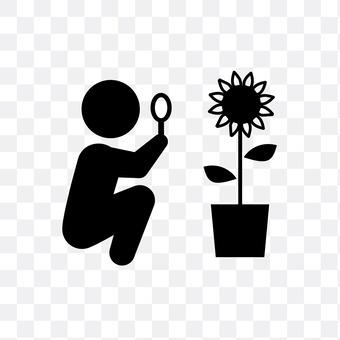 Observation of sunflower