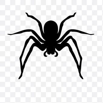 Uma aranha