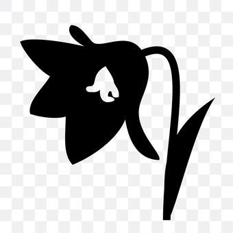 Vanilla daffodil